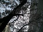 2011-04-11 14.49.17.jpg